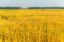 Investere i hvete