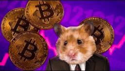 hamster som trader krypto