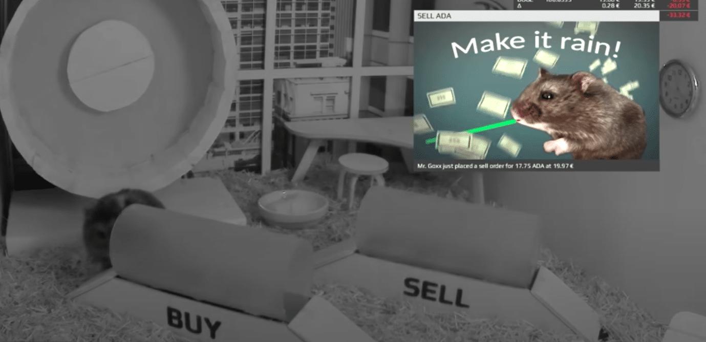 hamsteren løper på enten på buy eller sell posisjoner og tar valget automatisk for deg